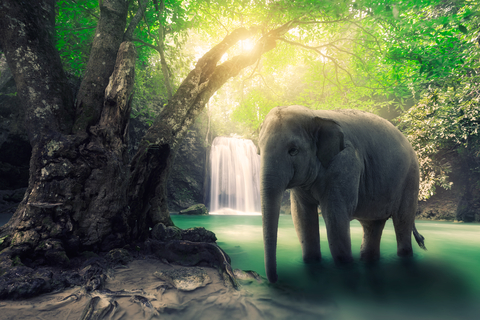 Science + Spirituality AKA The Blind Men and the Elephant